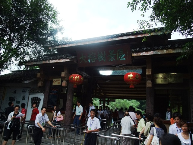 桂林旅行大きな木.JPG